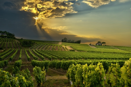 Photo pour sunset over the vineyards of the South of France - image libre de droit