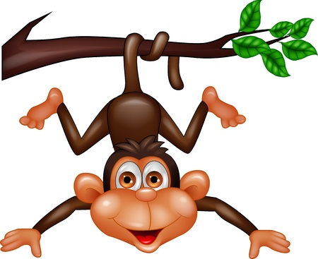 Monkey hanging on tree branch