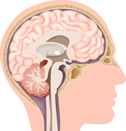 Illustration pour Vector illustration of Human Internal Brain Anatomy - image libre de droit
