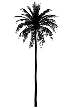 Photo for silhouette of date palm tree isolated on white background - Royalty Free Image