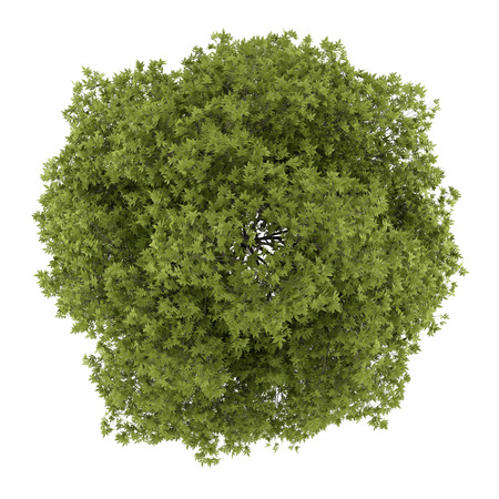 Foto de top view of white ash tree isolated on white background - Imagen libre de derechos