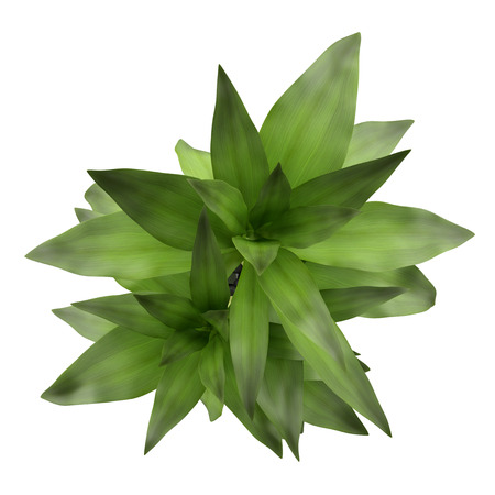 Photo for top view of bamboo plant in vase isolated on white background - Royalty Free Image