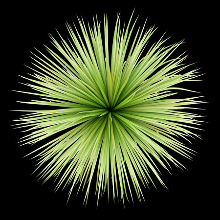 Photo pour top view of potted palm tree isolated on black background - image libre de droit