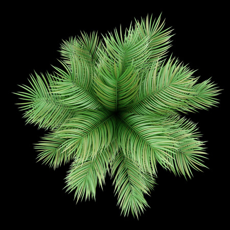 Photo for top view of potted palm tree isolated on black background - Royalty Free Image