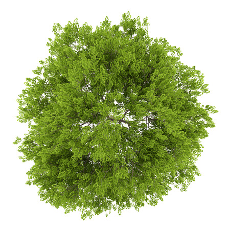 Photo pour top view of maidenhair tree isolated on white background - image libre de droit