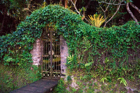 Photo for Closed gates covered with ivy to the tropical garden, Bali, Indonesia - Royalty Free Image