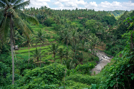 Photo for Curved river flowing in green valley on Bali, Indonesia - Royalty Free Image