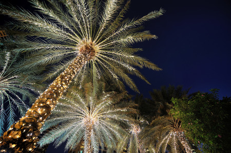 Photo pour palm trees decorated with Christmas garland night - image libre de droit