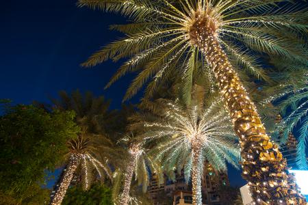 Photo for christmas decoration background palm tree. - Royalty Free Image