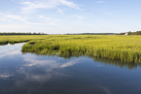 Photo pour A salt marshland landscape at Fripp Island, SC - image libre de droit