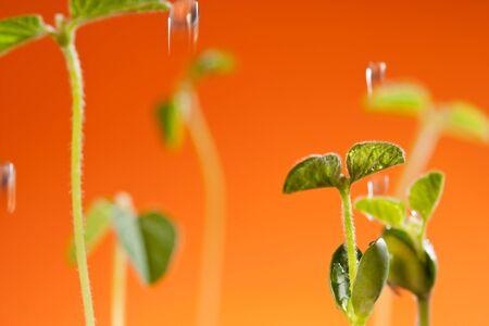 Plant growth, indicates that vigorous