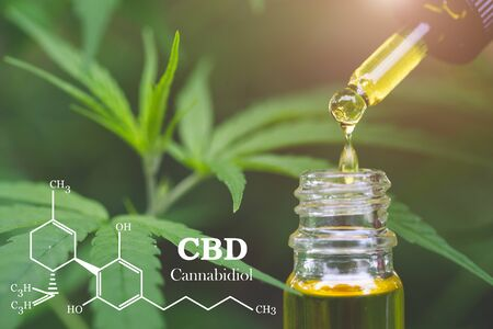 Photo for CBD  elements in Cannabis, Hemp oil, medical marijuana,  cannabinoids and health. - Royalty Free Image
