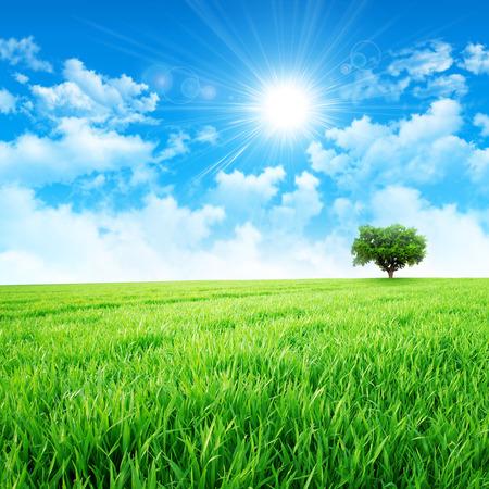 Foto de Green like a meadow in the sun. Intense sun breaking through the clouds upon a green grass field - Imagen libre de derechos