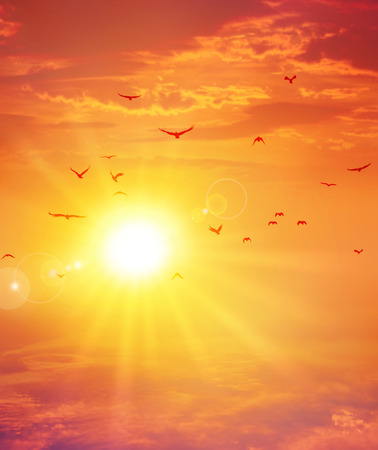 Foto de Birds flight ahead the setting sun in a cloudy sky background - Imagen libre de derechos
