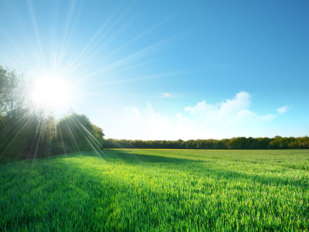 Foto de Fresh field of green grass growing slowly under the rising sun - Imagen libre de derechos