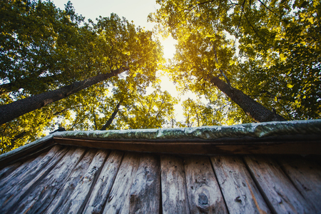 Foto de the roof of a wooden forest house, against the background of forest trees. Bottom view - Imagen libre de derechos