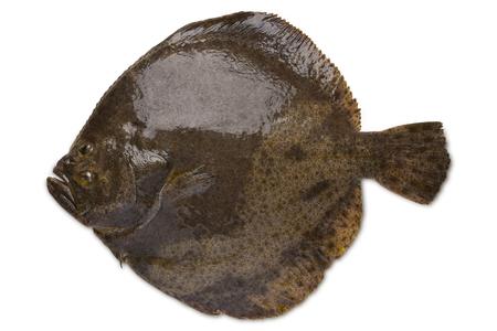 Photo pour Turbot fish isolated on white background - image libre de droit