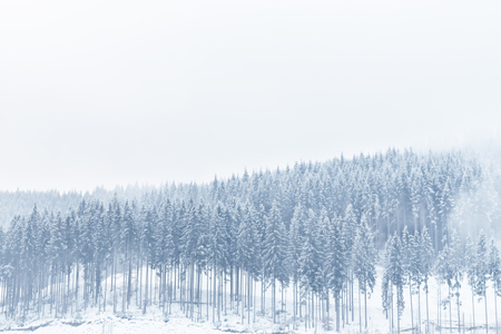 Photo for Winter view of a fir forest covered with snow. - Royalty Free Image