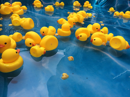 Photo for yellow duck plastic - Royalty Free Image