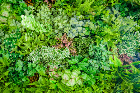 Foto de Background of plastic plant on wall, vertical garden  - Imagen libre de derechos