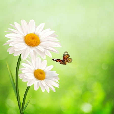 Photo pour Happy meadow. Abstract summer backgrounds with daisy flowers - image libre de droit