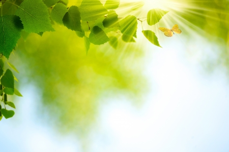Photo for Beauty Summer Day  Abstract environmental backgrounds for your design - Royalty Free Image