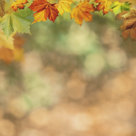 Foto de Abstract autumnal backgrounds for your design - Imagen libre de derechos