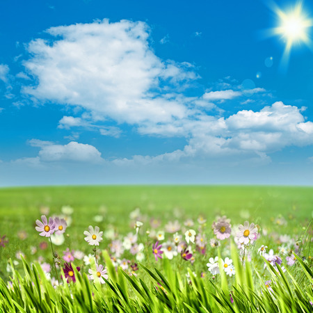 Foto de Beauty meadow with flowers and green grass under blue skies, seasonal backgrounds - Imagen libre de derechos