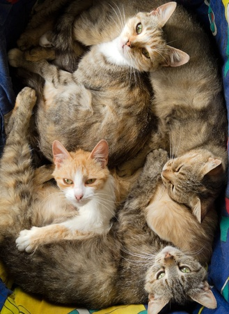 many cats are together and have fun