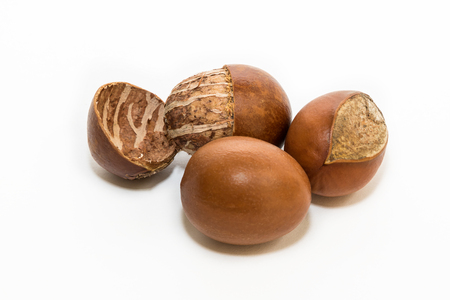 Photo pour Shea nuts, with detail of its interior. Vitellaria paradoxa. - image libre de droit