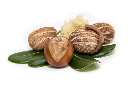 Photo for Shea nuts on leaves. Vitellaria Paradoxa - Royalty Free Image