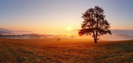 Photo pour Alone tree on meadow at sunset with sun and mist - panorama - image libre de droit