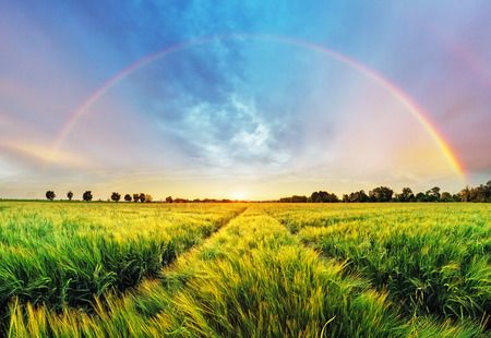Foto de Rainbow Rural landscape with wheat field on sunset - Imagen libre de derechos