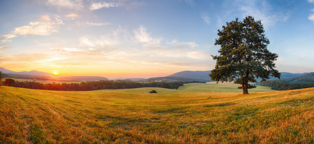 Photo for Alone tree on meadow at sunset with sun - panorama - Royalty Free Image
