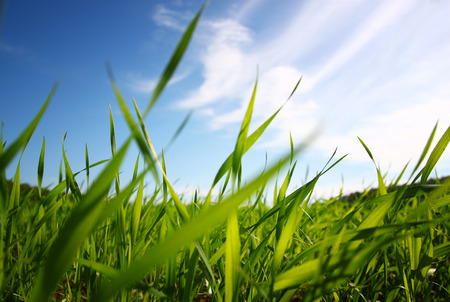 Photo pour low angle view of fresh grass against blue sky with clouds. freedom and renewal concept - image libre de droit