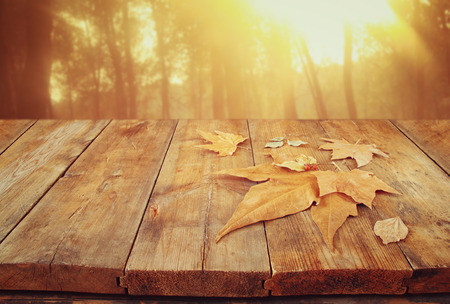 autumn background of fallen leaves over wooden table and forest backgrond with lens flare and sunset