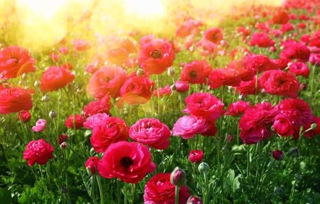 Photo pour Image of beautiful pink spring flowers. - image libre de droit