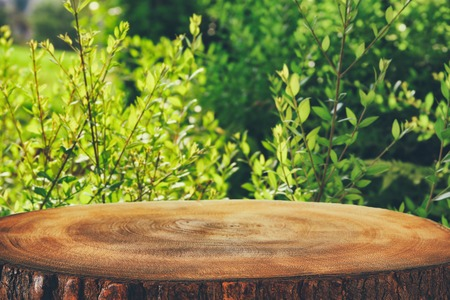 Foto de image of wooden table in front green forest trees landscape background. for product display and presentation. - Imagen libre de derechos