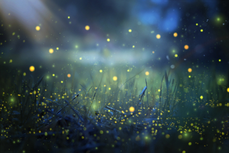 Photo pour Abstract and magical image of Firefly flying in the night forest. Fairy tale concept - image libre de droit