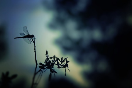 Photo pour Abstract and magical image of dragonfly silhouette in the night forest. Fairy tale concept - image libre de droit
