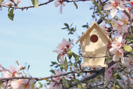 Foto de Little birdhouse in spring over blossom cherry tree - Imagen libre de derechos