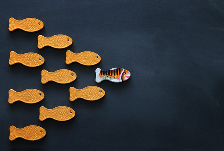 Photo pour Leadership concept with swimming fish over blackboard background. One leader leads others - image libre de droit