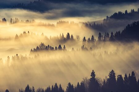 Photo for Misty mountain forest landscape in the morning, Poland - Royalty Free Image