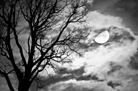 Silhouette of dead Tree against moon and clouds in a cloudy night Processed with black and white style,can be used for background