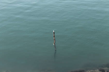 Foto de An isolated branch that comes out of the surface of the water (Pesaro, Italy, Europe) - Imagen libre de derechos
