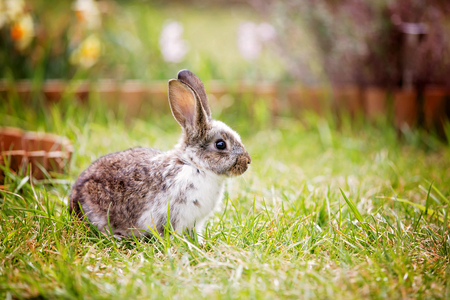 Photo for Adorable litle bunny in garden, pet at home, cute rabbit eating grass in park - Royalty Free Image