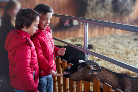 Photo pour Children, feeding goats on a farm, kids and animal interaction and weekend activity - image libre de droit