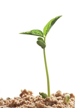 Photo pour beans sprouts - image libre de droit