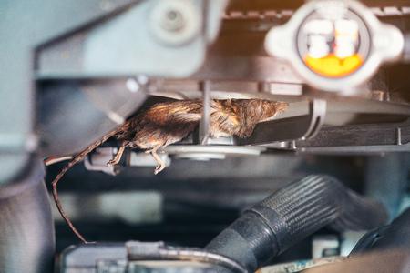 Foto de Auto mechanic clean dirty air fan form mouse.It try collect garbage to build rat's nest in car. technician repairs problem - Imagen libre de derechos
