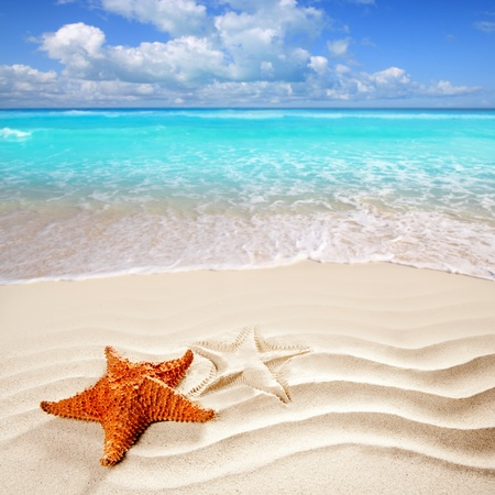 Photo for caribbean starfish over wavy white sand beach such a summer vacation symbol - Royalty Free Image